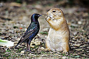 Squirel_and_birdy